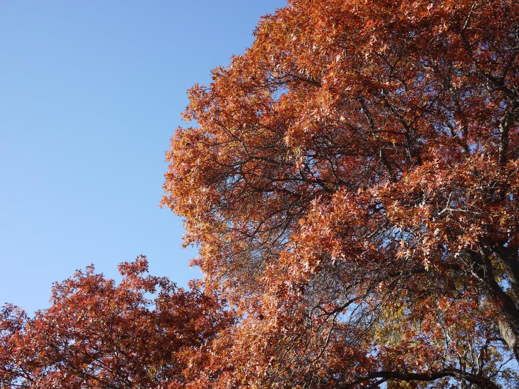 Fall1